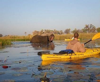 elephant meets kayak